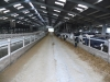 New Zealand Dairy Farms Can Save Big on Electricity