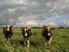 Energy Efficiency First then Renewables for Farmers